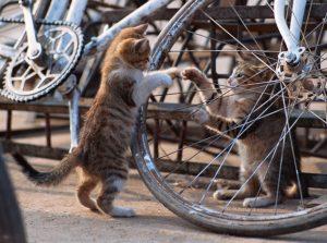 自転車保険の加入状況は会社で把握すべきか