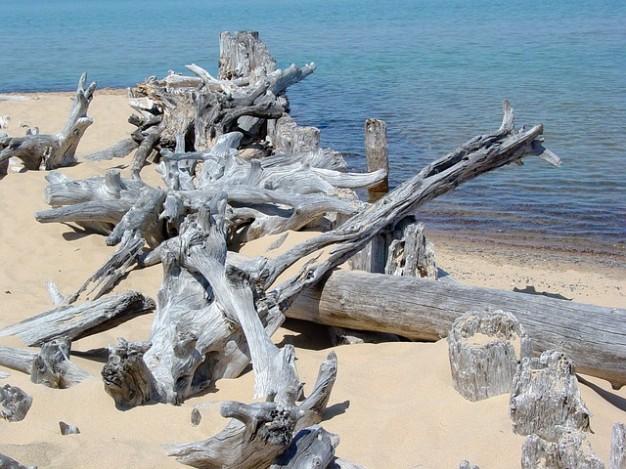 shore-lake-driftwood-superior-beach-sand-landscape_121-73590